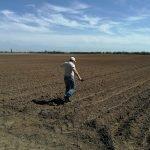 «Овощной дом» провел мониторинг состояния всходов картофеля