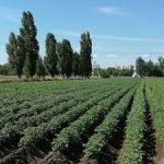 «Овочевий дім» запрошує на «День поля» в с.Таврійск