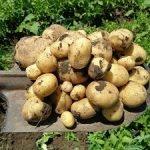Сорта Овощного Дома на юге Украины!